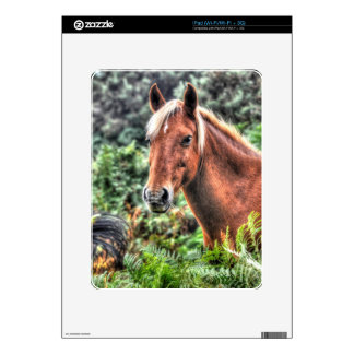 Wild New Forest Pony Grazing on Bracken Skins For The iPad