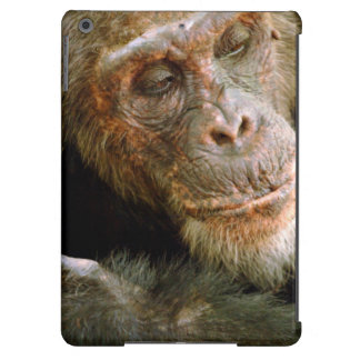 Wild Old Male Chimpanzee (Pan Troglodytes) Cover For iPad Air