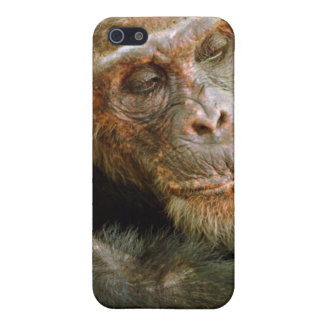 Wild Old Male Chimpanzee (Pan Troglodytes) iPhone SE/5/5s Case