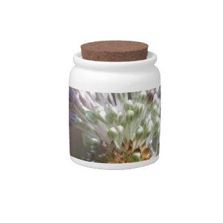 Wild Onion - Crow Garlic - Allium vineale Candy Dish