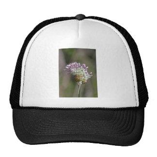 Wild Onion - Crow Garlic - Allium vineale Hats