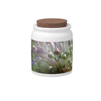 Wild Onion Wildflower Crow Garlic - Allium vineale Candy Dishes
