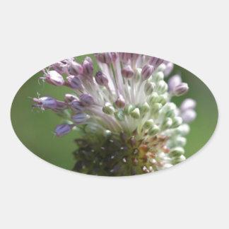 Wild Onion Wildflower Crow Garlic - Allium vineale Oval Sticker