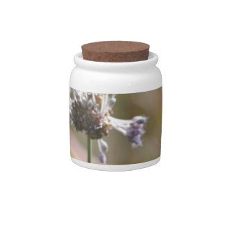 Wild Onion Wildflowers - Wild Onion - Crow Garlic Candy Jars