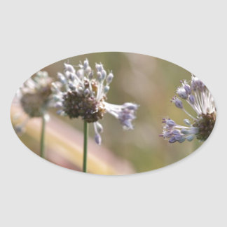 Wild Onion Wildflowers - Wild Onion - Crow Garlic Oval Sticker