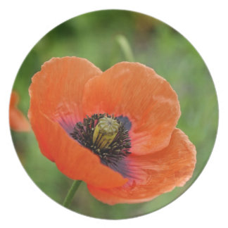 Wild Orange Poppy Flower (NZ) Plate