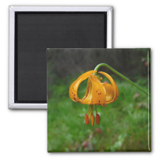 Wild Orange Tiger Lily Flower Magnet