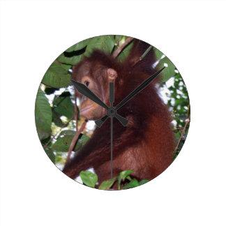 Wild Orangutan in Tanjung Puting National ParkCloc Round Wallclocks