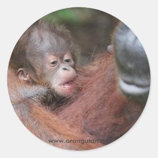 Wild Orangutan Mother and Newborn Baby Classic Round Sticker