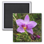 Wild Orchid Purple Tropical Flower Magnet