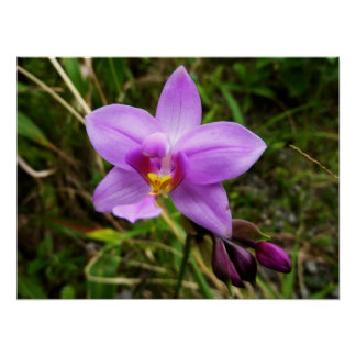 Wild Orchid Purple Tropical Flower Poster
