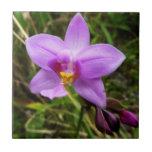 Wild Orchid Purple Tropical Flower Tile