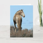 Wild Oregon Mustang Stallion Greeting Card