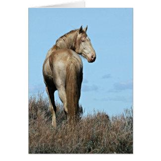 Wild Oregon Mustang Stallion Greeting Card