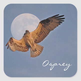 Wild Osprey & Super Moon Photo Design Square Sticker