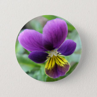 Wild Pansy Button
