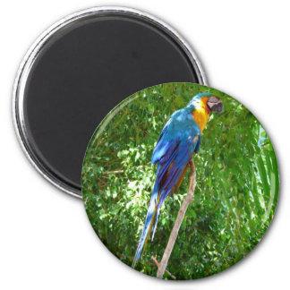 Wild Parrot 2 Inch Round Magnet