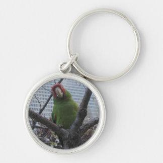 Wild parrot 2 keychain