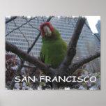 Wild Parrot #2 Print