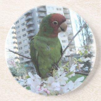 Wild Parrot #3 Beverage Coasters