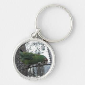 Wild parrot 4 keychain