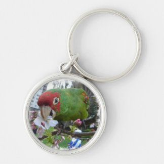 Wild parrot 5 keychains