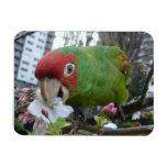 Wild Parrot #5 Vinyl Magnet