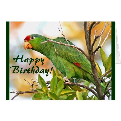 Wild Parrot Birthday Card