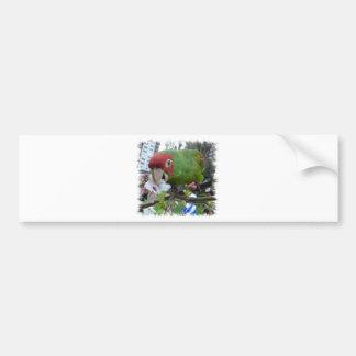 Wild parrot bumper sticker