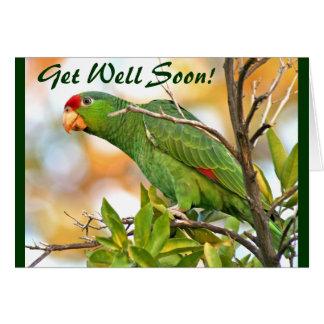Wild Parrot Get Well Card