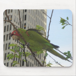 Wild Parrot Mouse Pad