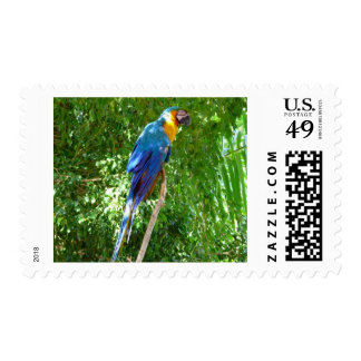 Wild Parrot Postage Stamp