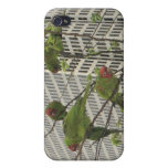 Wild parrots #6 cases for iPhone 4