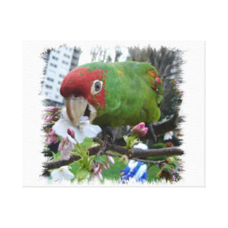 Wild Parrots of Telegraph Hill Canvas Print