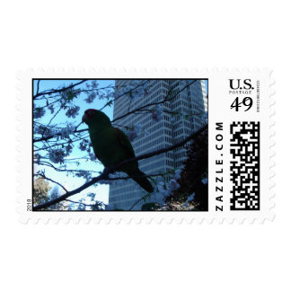 Wild Parrots of Telegraph Hill Postage