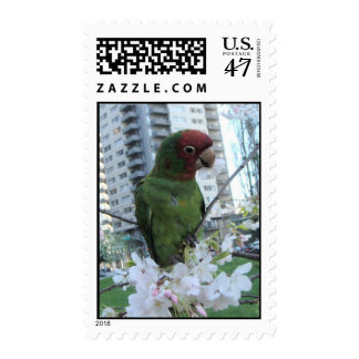 Wild parrots of Telegraph Hill Postage Stamp