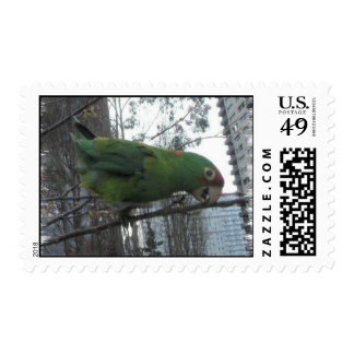 Wild parrots of Telegraph Hill Postage Stamps