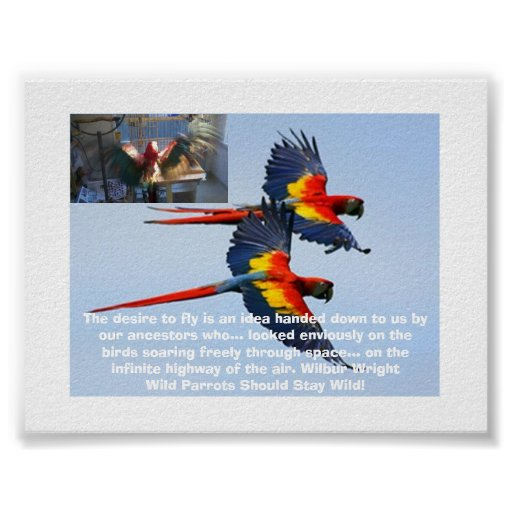 Wild Parrots Should Stay Wild Poster