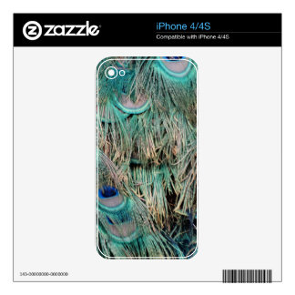 Wild Peacock Feathers Lovely Colors iPhone 4 Decal