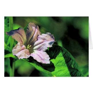 Wild Petunia Cards