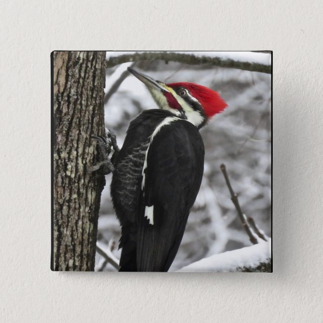 Wild Pileated Woodpecker Bird Button