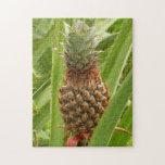 Wild Pineapple Puzzle
