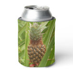 Wild Pineapple Tropical Fruit in Nature Can Cooler