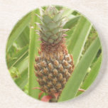 Wild Pineapple Tropical Fruit in Nature Drink Coaster