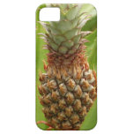 Wild Pineapple Tropical Fruit in Nature iPhone SE/5/5s Case