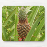 Wild Pineapple Tropical Fruit in Nature Mouse Pad