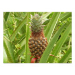 Wild Pineapple Tropical Fruit in Nature Photo Print