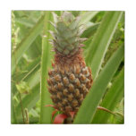 Wild Pineapple Tropical Fruit in Nature Tile