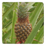 Wild Pineapple Tropical Fruit in Nature Trivet