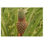 Wild Pineapple Tropical Fruit in Nature Wood Poster